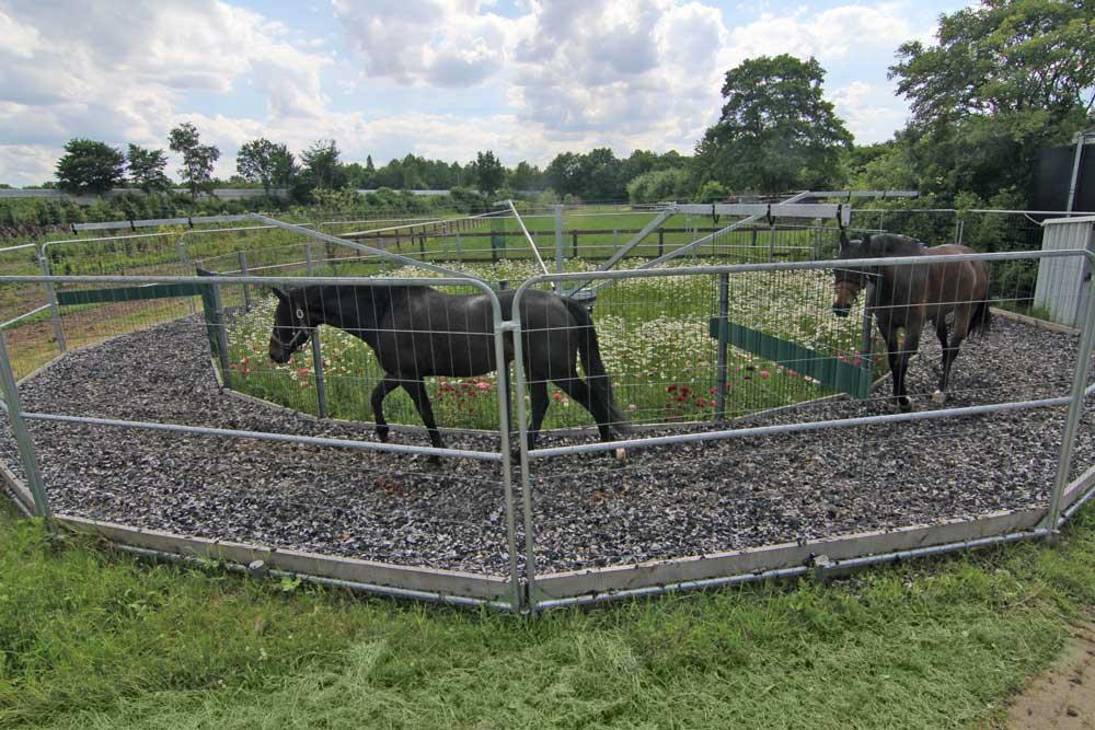 pferde-fuehranlage